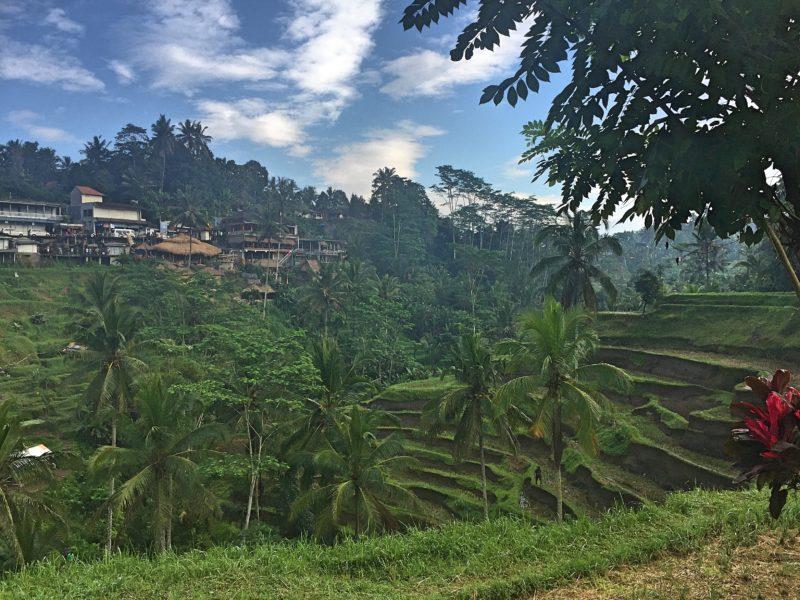 Rice Rice Baby: Half Day at Tegalalang Rice Terraces #jjadventures
